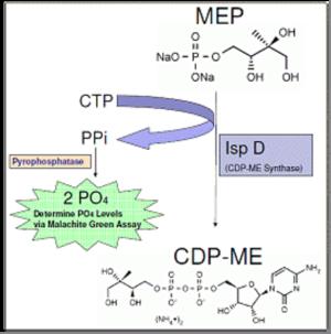 CDP-ME Synthase (IspD) Enzymatic Assay - Echelon Biosciences