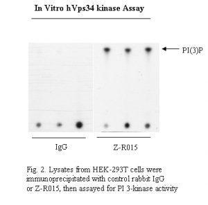 Vps34 antibody - Echelon Biosciences